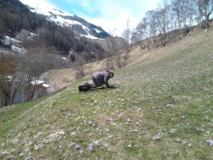 Taupier dans l'Ain (01) en France et Suisse