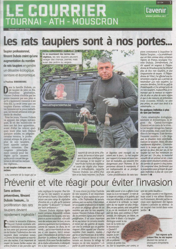 rat_taupier_tournai